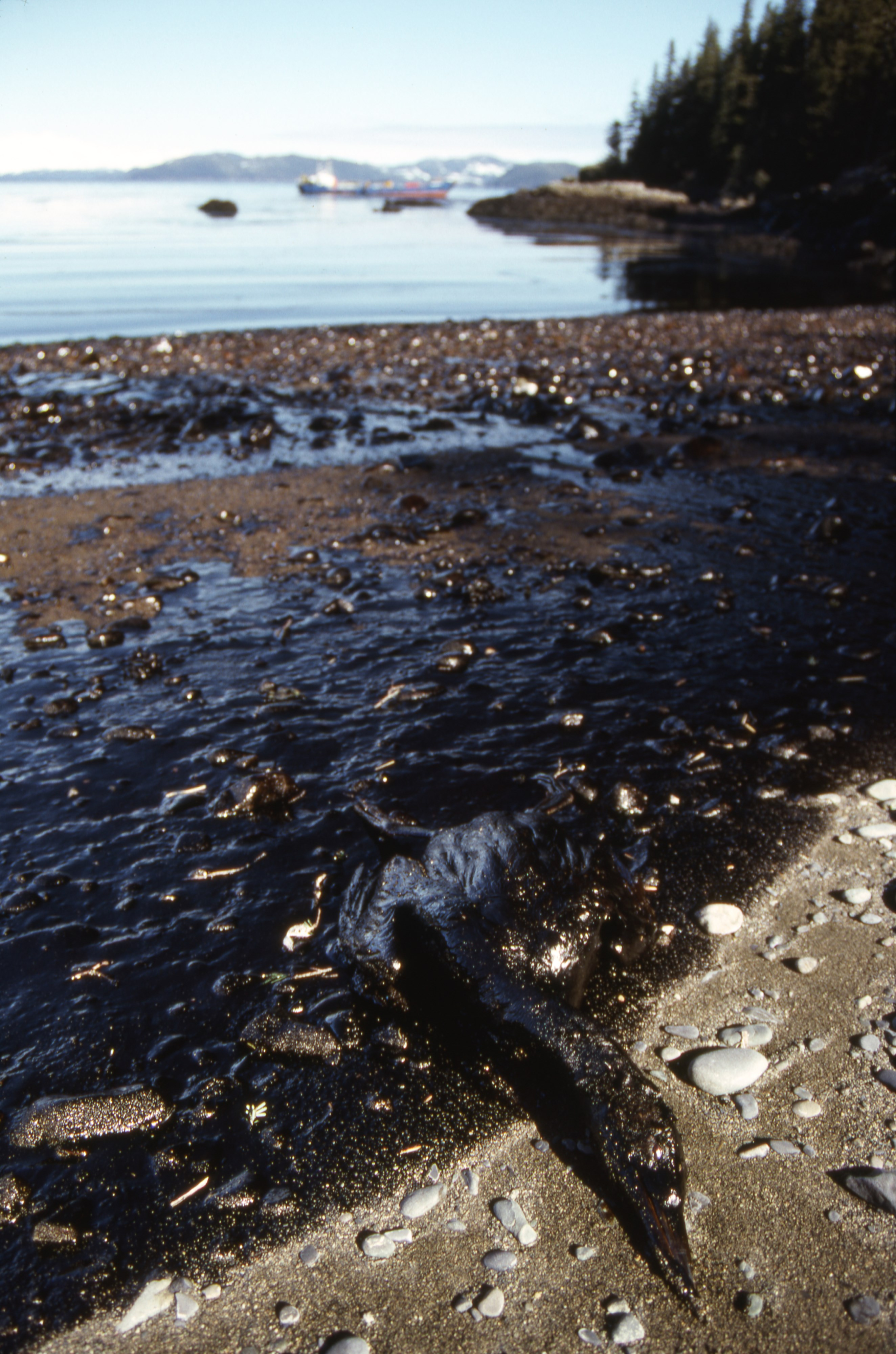 View record for Exxon Valdez Oil Spill photographs from Fish and Game.